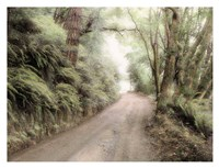 Lost Coast Road Fine Art Print
