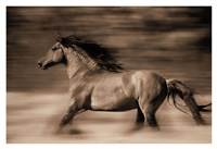 Wind Runner Fine Art Print