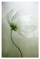 Cosmos Charisma Fine Art Print