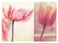 Poppy & Tulip Fine Art Print