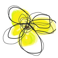 Yellow Petals Two Fine Art Print