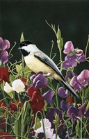 Sweet Peas And Chickadee Fine Art Print