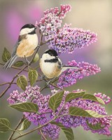 Lilacs and Chickadees Framed Print