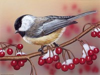 Chickadee With Berries Fine Art Print