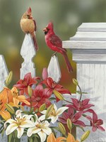 Lilies And Cardinals Fine Art Print