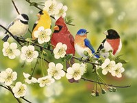 Songbirds On a Flowering Branch Fine Art Print