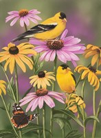 Golden Finches Fine Art Print