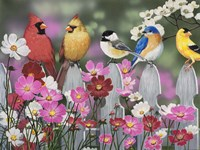 Song Birds and Cosmos Fine Art Print