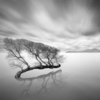 Water Tree VII Fine Art Print