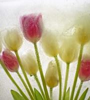 Flores Congeladas 614 Fine Art Print