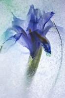 Flowers on Ice-6 Fine Art Print