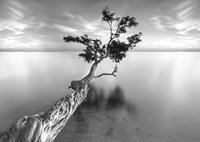 Water Tree XIII Fine Art Print