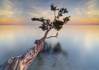 Water Tree XIV Fine Art Print