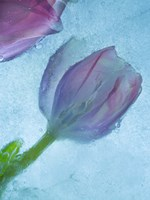 Flowers on Ice-2 Fine Art Print