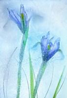 Flores Azules 57 Fine Art Print