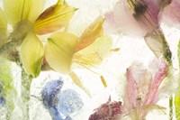 Flores en Hielo IX Fine Art Print