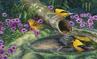Zen Moment Fine Art Print