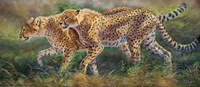 March Of The Cheetahs Fine Art Print