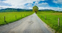 Country gravel road passing through a field, Hyatt Lane, Cades Cove, Great Smoky Mountains National Park, Tennessee Fine Art Print