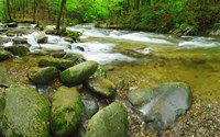Stream following through a forest, Little River, Great Smoky Mountains National Park, Tennessee, USA Fine Art Print
