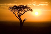 Silhouette of tree at dusk, Tanzania Fine Art Print