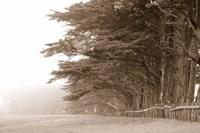 Cypress trees along a farm, Fort Bragg, California, USA Fine Art Print