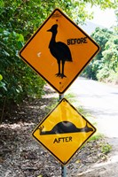 Warning sign at the roadside, Cape Tribulation, Queensland, Australia Fine Art Print