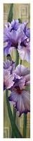 Iris I Fine Art Print