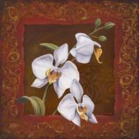 Orchid Study I Fine Art Print