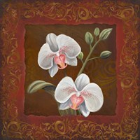 Orchid Study II Framed Print