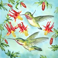 Calliopes Hummingbirds Fine Art Print