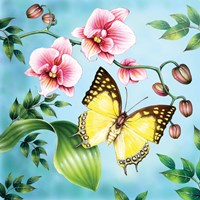 Nawab Fine Art Print