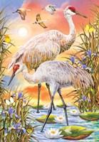 Sandhill Cranes Fine Art Print