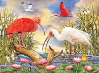 Scarlet And White Ibis Fine Art Print