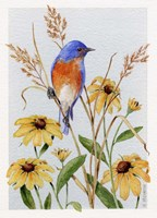 Bluebird And Blackeyed Susans Fine Art Print