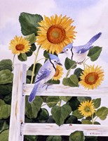 Bluejays And Sunflowers Fine Art Print