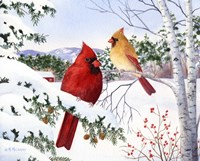 Cardinals And Hemlock Tree Fine Art Print