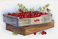 Cranberry Crates Fine Art Print