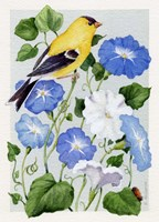 Goldfinch And Morning Glories Framed Print