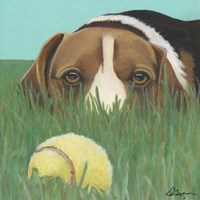 Dlynn's Dogs - Sunny Fine Art Print