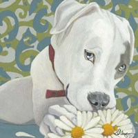 Dlynn's Dogs - Patch Fine Art Print