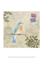 Bird & Postage I Fine Art Print
