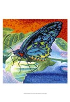 Poised Butterfly II Fine Art Print