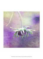 Waiting on Purple VI Fine Art Print