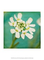 White Flowers III Fine Art Print