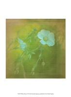 White Flowers VI Fine Art Print