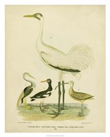 Antique Crane & Heron Fine Art Print