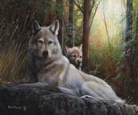 Recumbent Wolves Fine Art Print