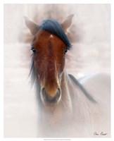 Horse Portrait I Fine Art Print