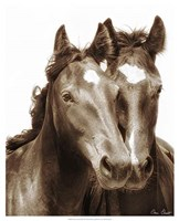 Horse Portrait III Fine Art Print